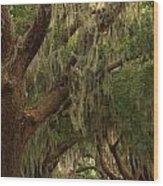 Hallway Of Oaks Wood Print