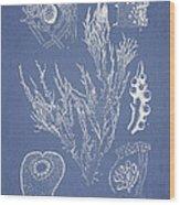 Halymenia Formosa And Eucheuma Spinosum Wood Print