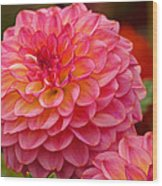 Hamari Rose - Dahlia Wood Print
