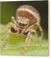 Hammerjawed Jumper I Wood Print by Clarence Holmes