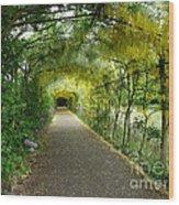 Hampton Court Palace Flower Tunnel Wood Print