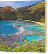 Hanauma Bay In Hawaii Wood Print
