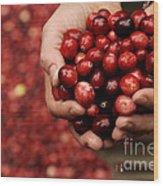 Handful Of Fresh Cranberries Wood Print