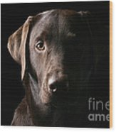 Handsome Chocolate Labrador Wood Print by Justin Paget