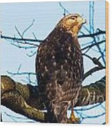 Handsome Hawk Wood Print