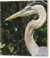 Handsome Heron Wood Print