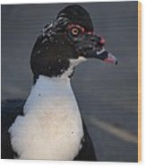 Handsome Muscovy Wood Print
