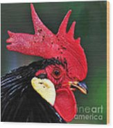 Handsome Rooster Wood Print