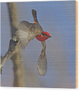 Handsome Vermillion Off The Limb Wood Print