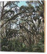 Hang Moss Tree Trail Wood Print