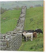 Hangin Out At Hadrians Wall England Scotland Wood Print