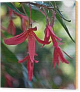 Hanging Asian Lillies Wood Print