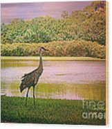 Hanging Around The Beautiful Florida Sand Crane Wood Print