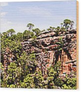 Hanging Forest Wood Print