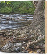 Hanging In There Wood Print by Wendell Thompson