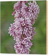 Hanging Lilac Wood Print