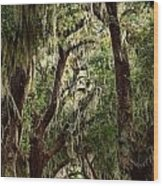 Hanging Moss And Giant Oaks Wood Print