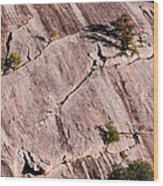 Hanging On To Dear Life - Enchanted Rock State Natural Area - Fredericksburg  Llano Wood Print