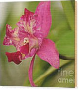 Hanging Orchid Wood Print