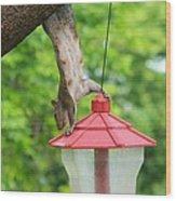 Hanging Squirrel Wood Print