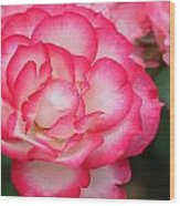 Hannah Gordon Floribunda Rose Wood Print