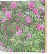 Hansa Roses Wood Print