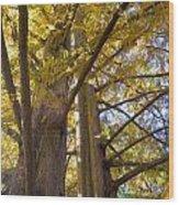 Haphazard Wood Print