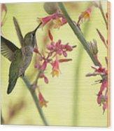 Happy As A Hummingbird  Wood Print