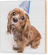 Happy Birthday Puppy Wood Print by Edward Fielding