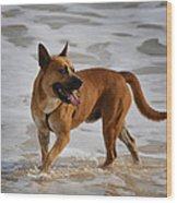 Happy Dogs 5 Wood Print