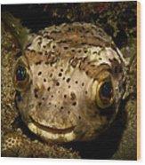 Happy Fish Wood Print by Craig Dietrich