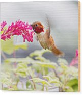 Happy Hummer Wood Print