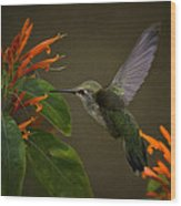 Happy Little Hummingbird  Wood Print