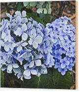 Happy Hydrangea Wood Print