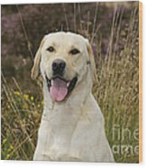 Happy Labrador Wood Print