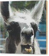 Happy Llama Wood Print