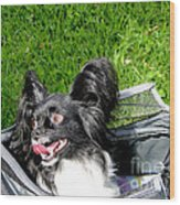 Happy Papillon In A Bag Wood Print