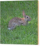 Happy Rabbit Wood Print