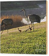 Happy Sandhill Crane Family - Original Wood Print