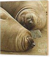 Happy Seals Wood Print