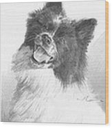 Happy Sled Dog Pencil Portrait Wood Print