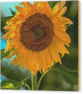 Happy Sunflower Wood Print