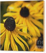 Happy Susans Wood Print