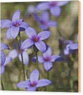 Happy Tiny Bluet Wildflowers Wood Print