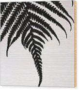 Hapu'u Frond Leaf Silhouette Wood Print