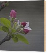 Har-gilo Flowers 1 Wood Print