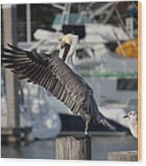 Harbor Pelican And Gull Wood Print