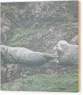 Harbor Seal Dual Wood Print