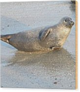 Harbor Seal Wood Print