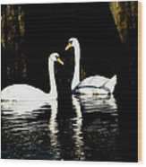 Harbor Swans Wood Print